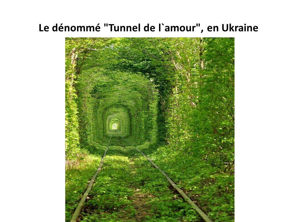 Le dénommé Tunnel de l`amour , en Ukraine