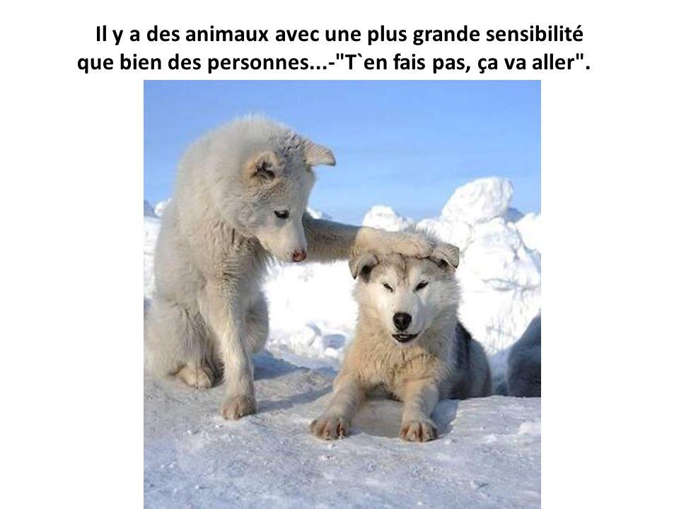 Il y a des animaux avec une plus grande sensibilité que bien des personnes...- T`en fais pas, ça va aller .