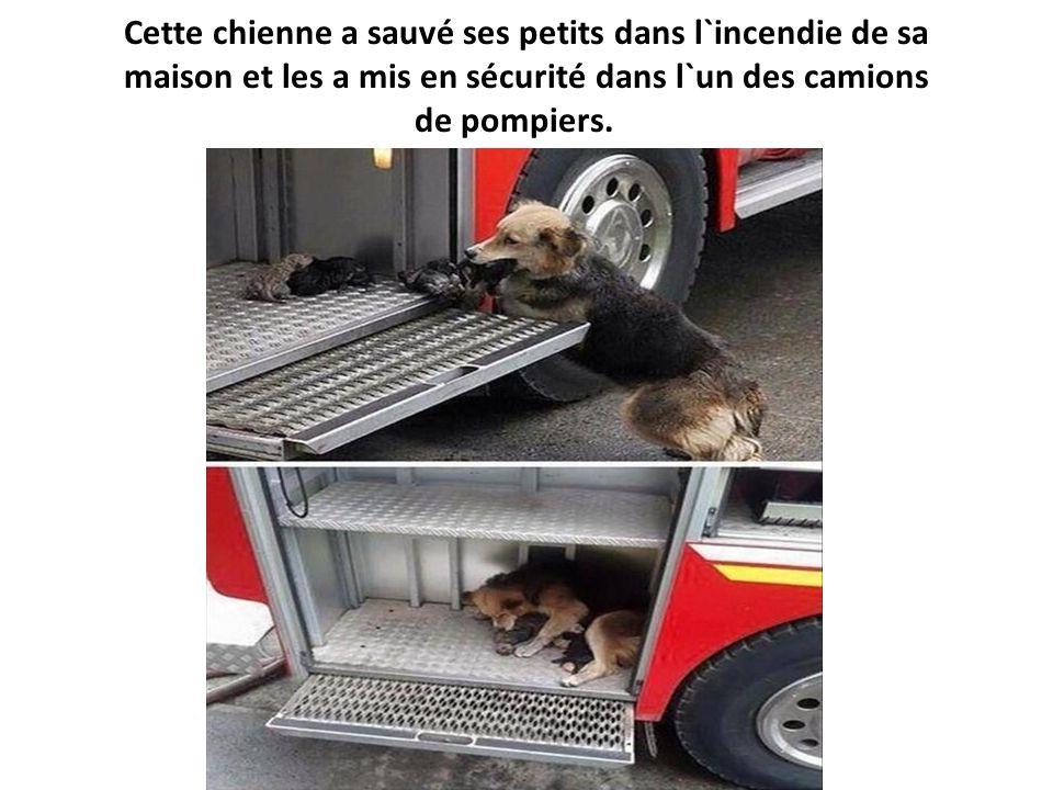 Cette chienne a sauvé ses petits dans l`incendie de sa maison et les a mis en sécurité dans l`un des camions de pompiers.
