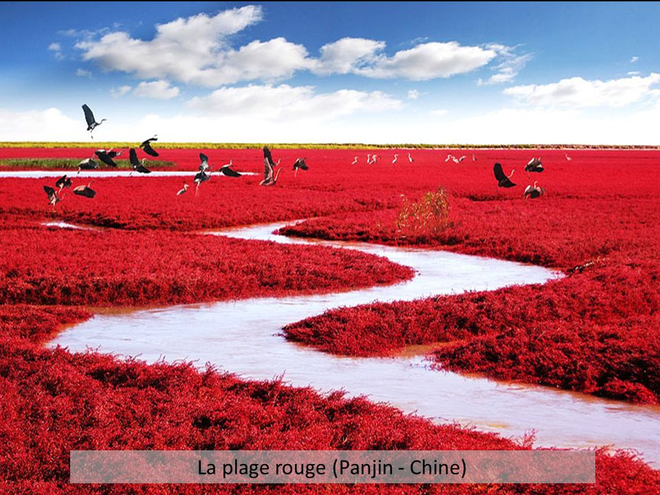 La plage rouge (Panjin - Chine)