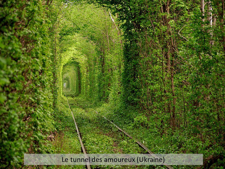 Le tunnel des amoureux (Ukraine)