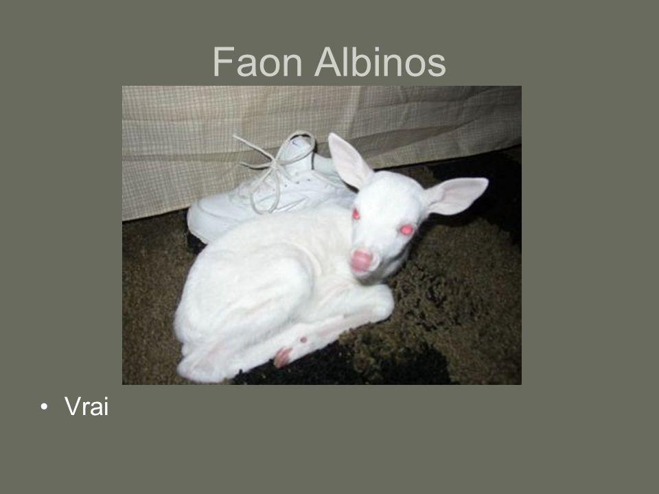 Faon Albinos Vrai