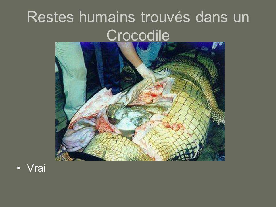 Restes humains trouvés dans un Crocodile