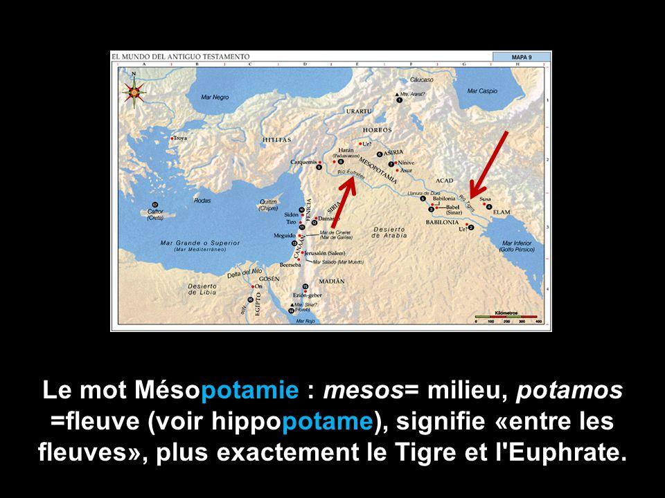 Le mot Mésopotamie : mesos= milieu, potamos =fleuve (voir hippopotame), signifie «entre les fleuves», plus exactement le Tigre et l Euphrate.
