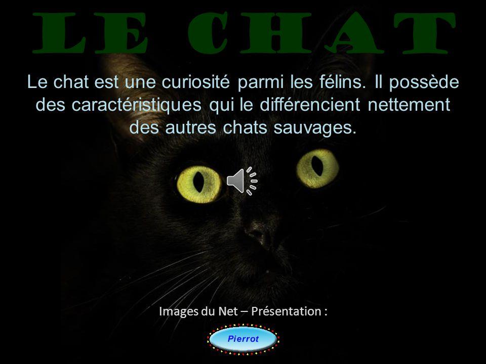 Le chat Le chat est une curiosité parmi les félins. Il possède des caractéristiques qui le différencient nettement.
