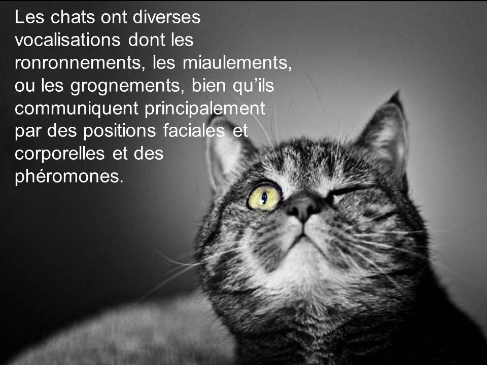 Les chats ont diverses vocalisations dont les ronronnements, les miaulements, ou les grognements, bien qu'ils communiquent principalement par des positions faciales et corporelles et des