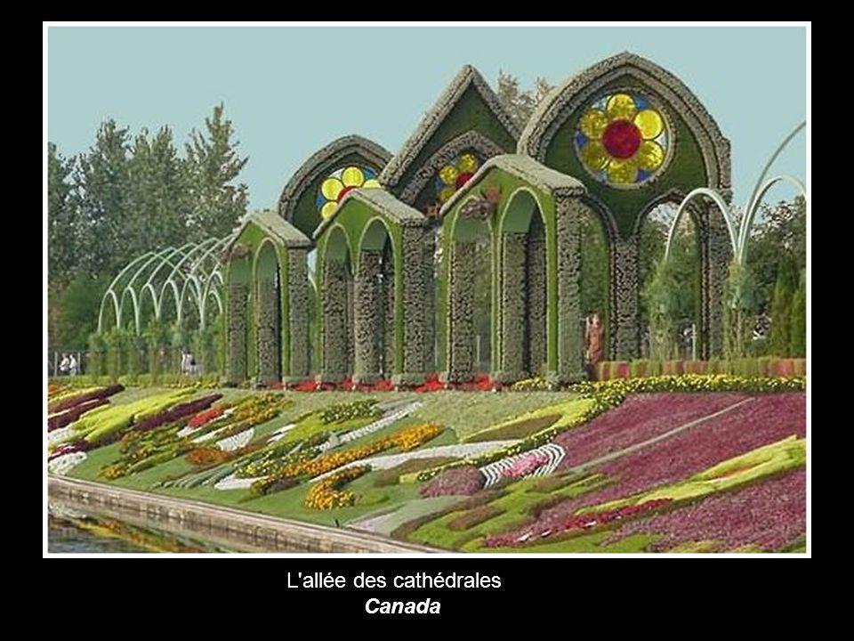 L allée des cathédrales