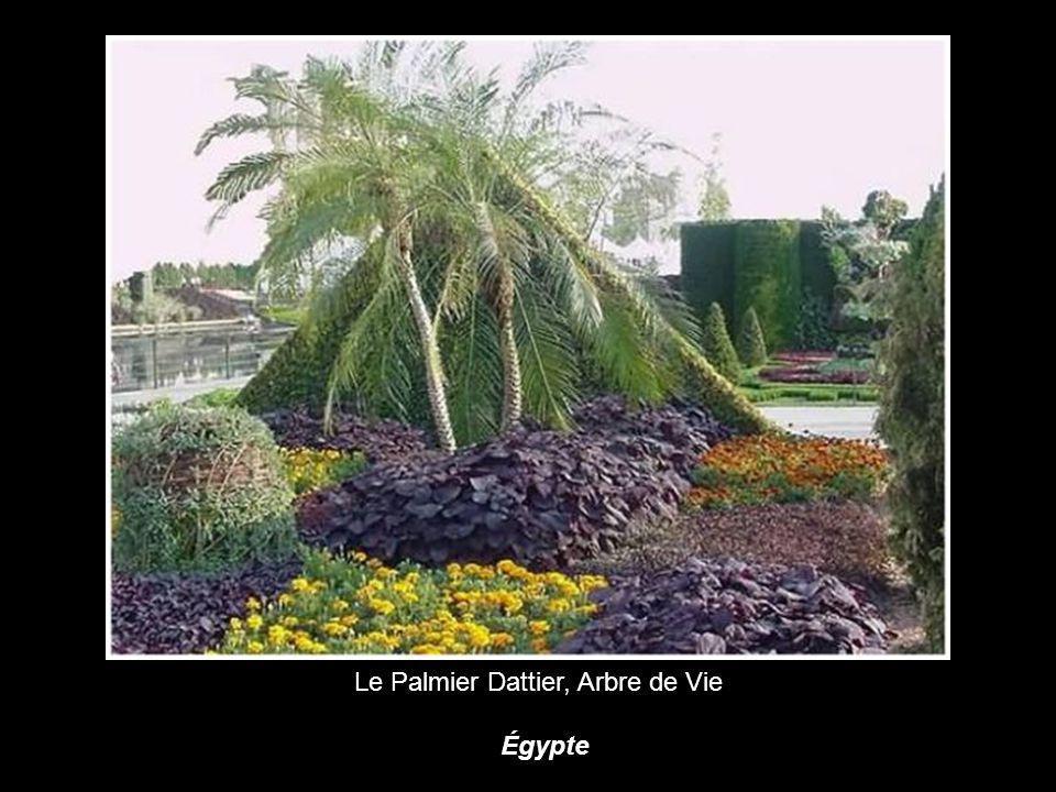 Le Palmier Dattier, Arbre de Vie Égypte