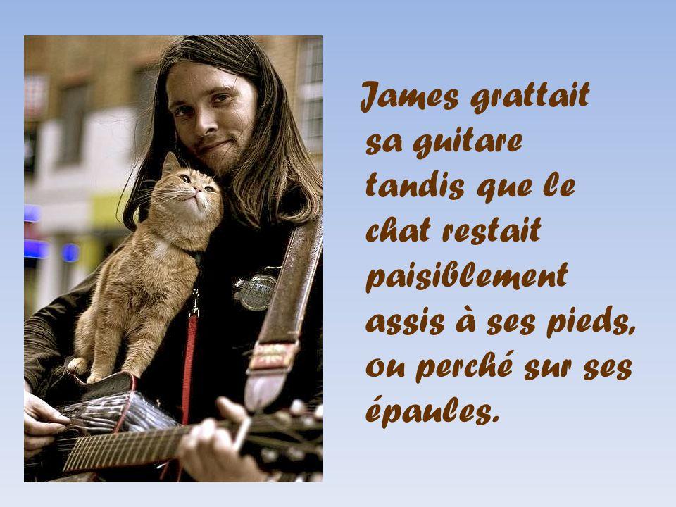 James grattait sa guitare tandis que le chat restait paisiblement assis à ses pieds, ou perché sur ses épaules.