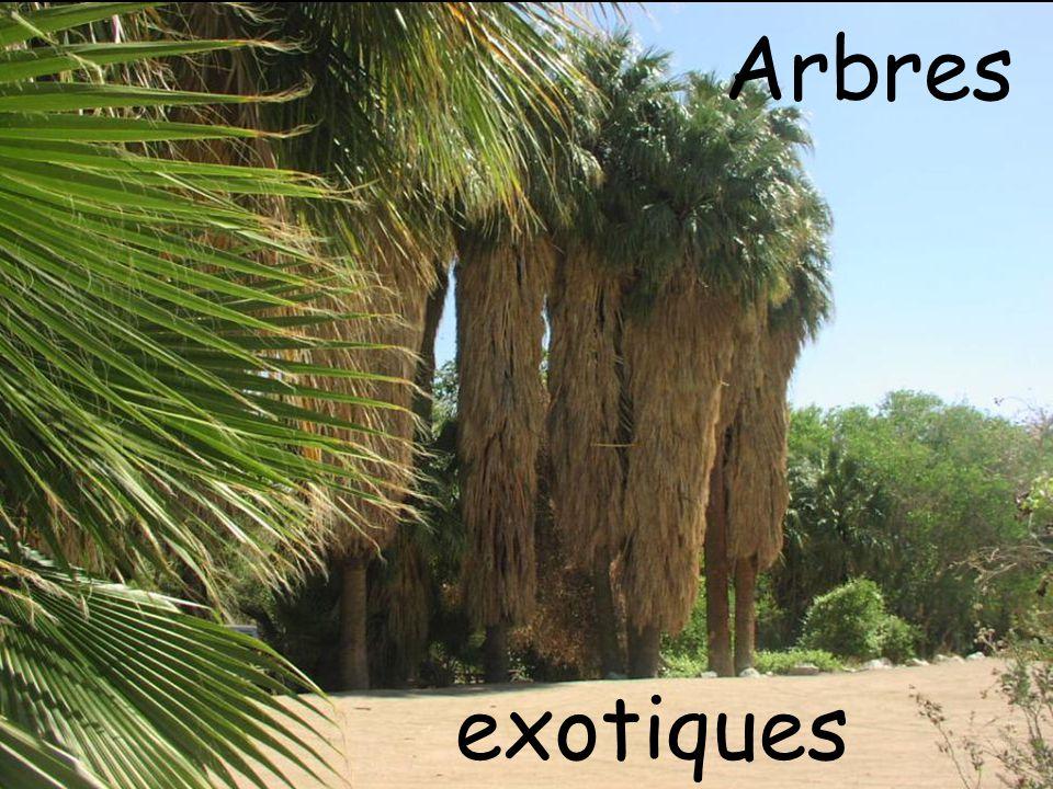 Arbres exotiques