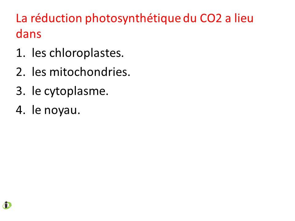 La réduction photosynthétique du CO2 a lieu dans