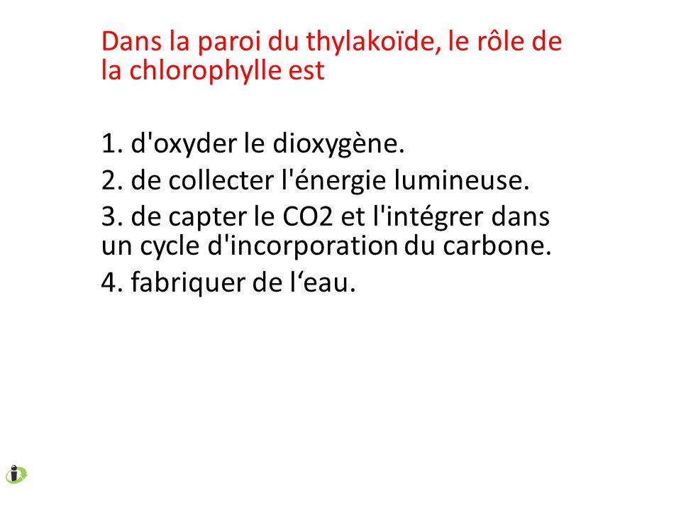 Dans la paroi du thylakoïde, le rôle de la chlorophylle est