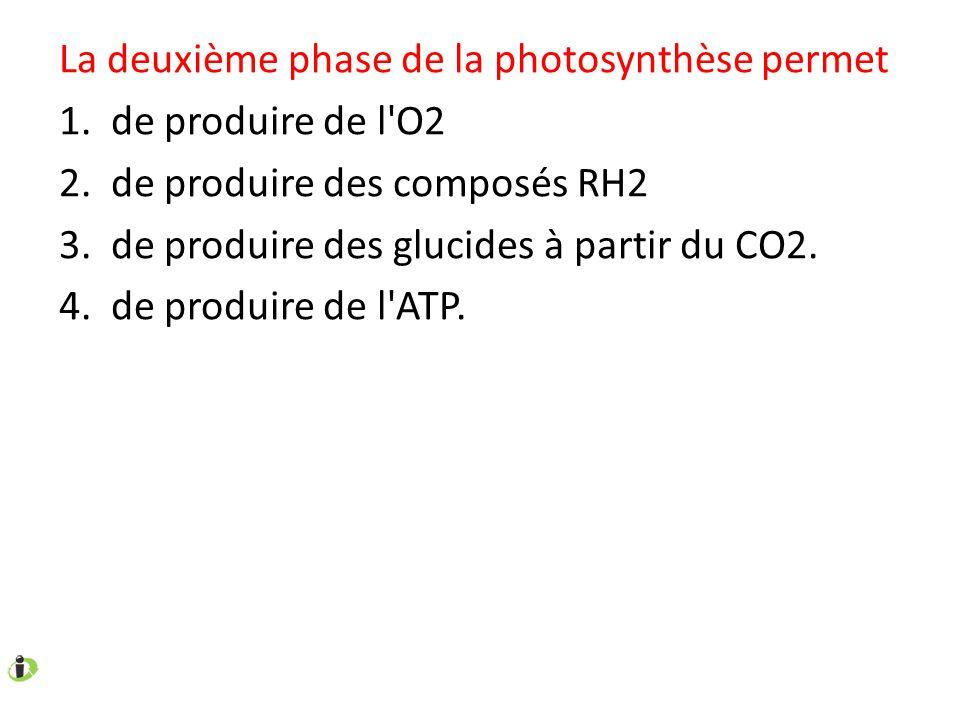 La deuxième phase de la photosynthèse permet