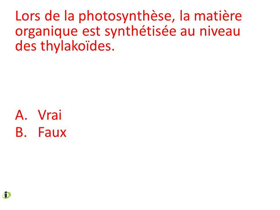 Lors de la photosynthèse, la matière organique est synthétisée au niveau des thylakoïdes.