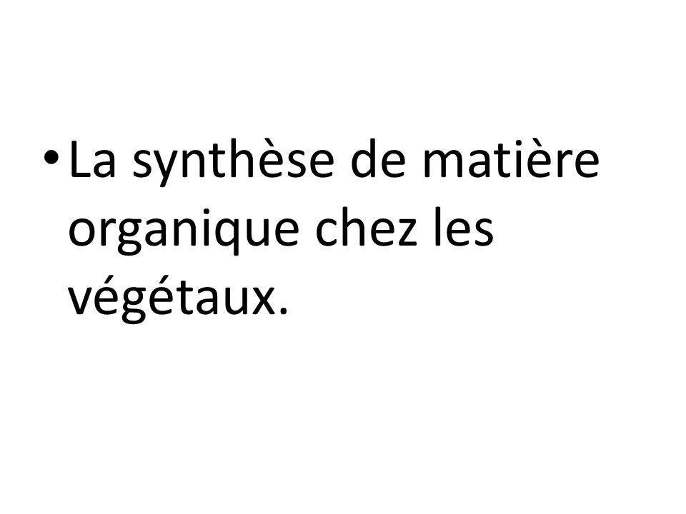 La synthèse de matière organique chez les végétaux.