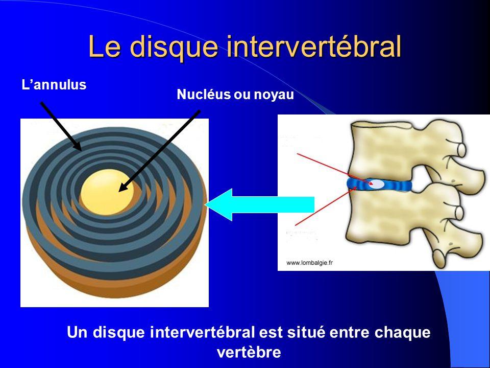Un disque intervertébral est situé entre chaque vertèbre