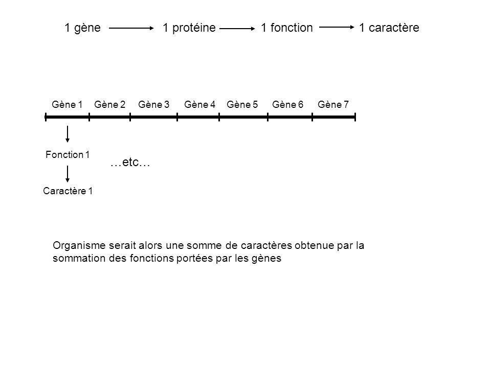 1 gène 1 protéine 1 fonction 1 caractère