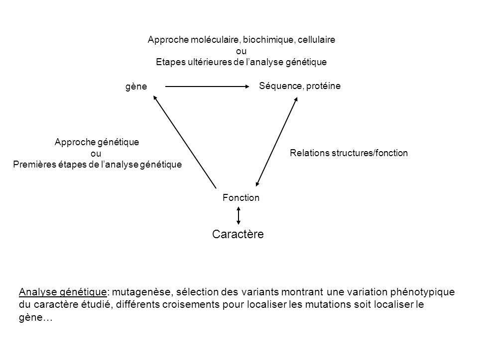 Approche moléculaire, biochimique, cellulaire