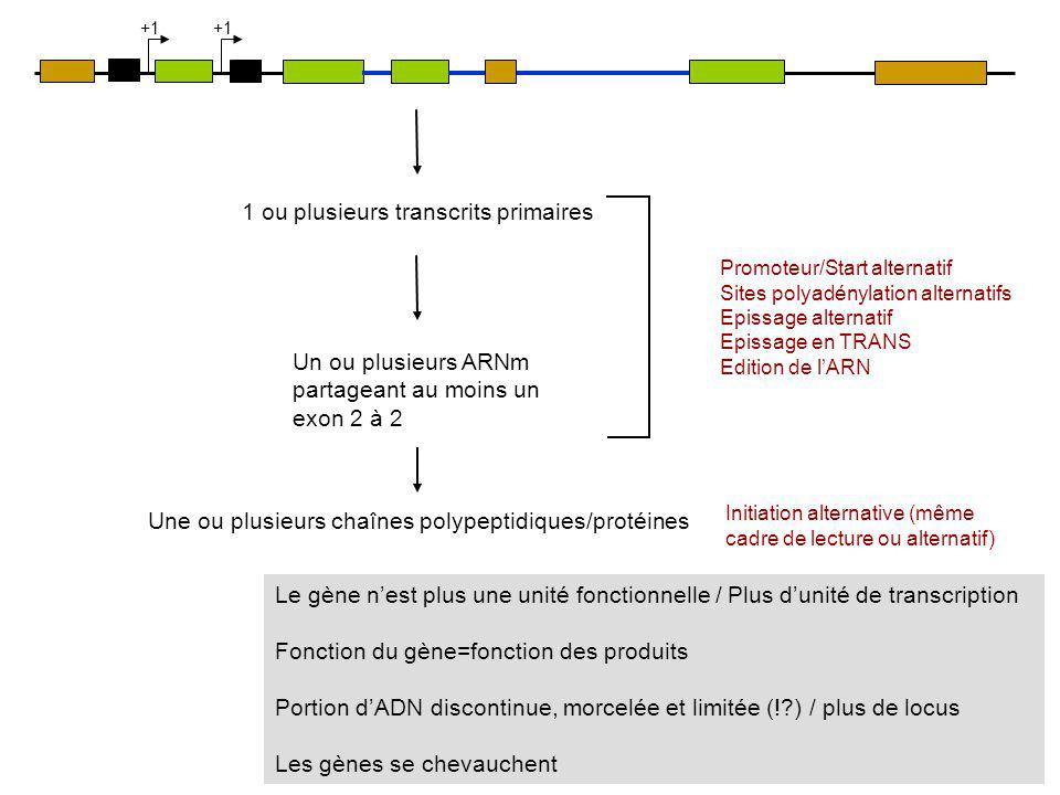 1 ou plusieurs transcrits primaires