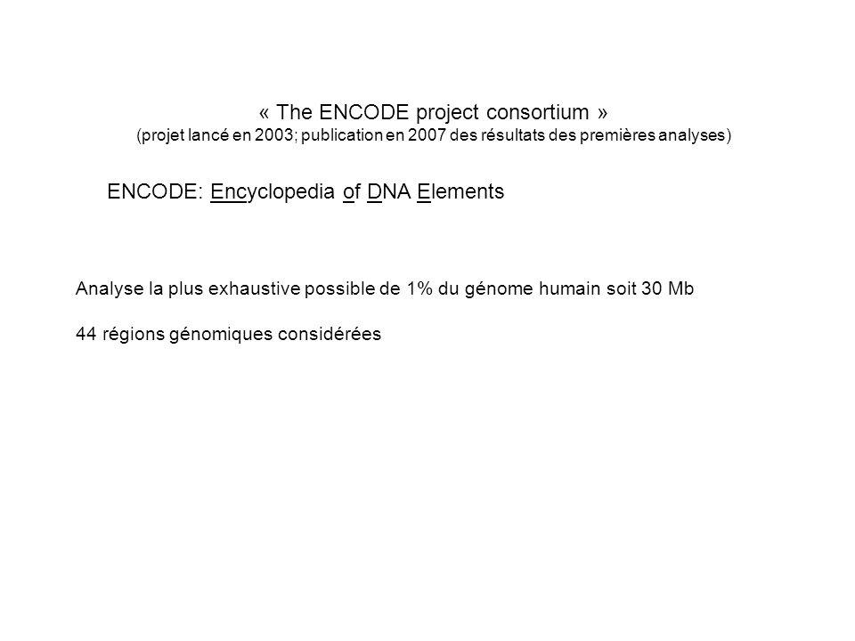 « The ENCODE project consortium »