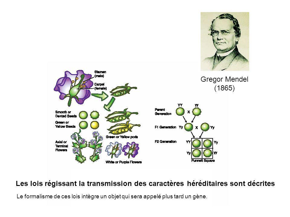 Gregor Mendel (1865)