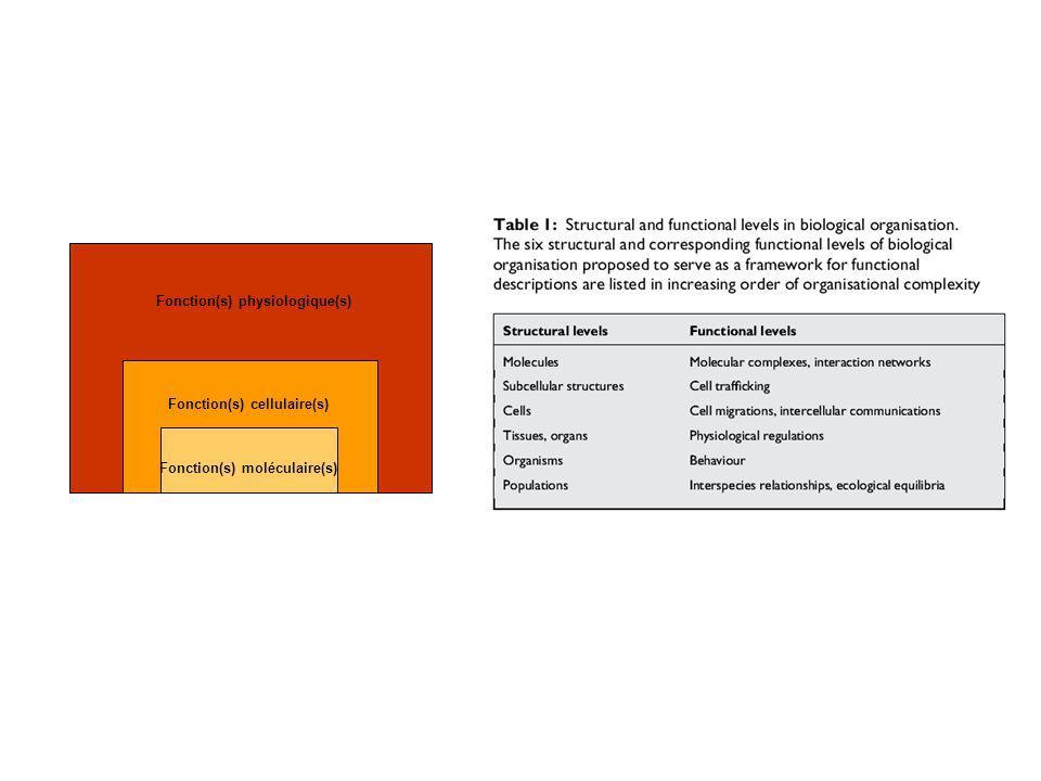 Fonction(s) physiologique(s)