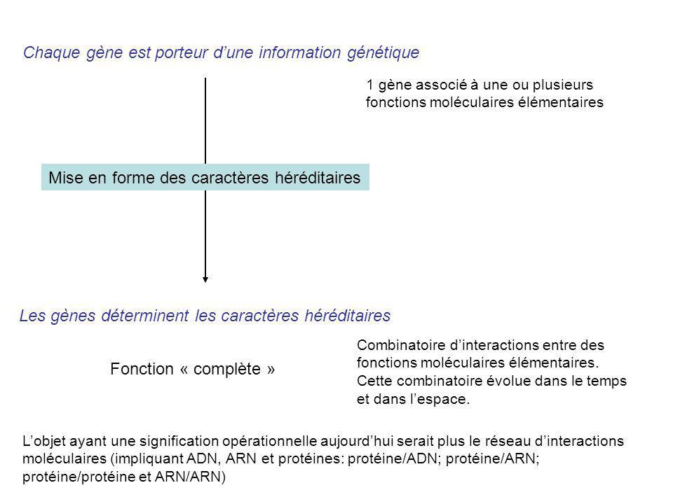 Chaque gène est porteur d'une information génétique