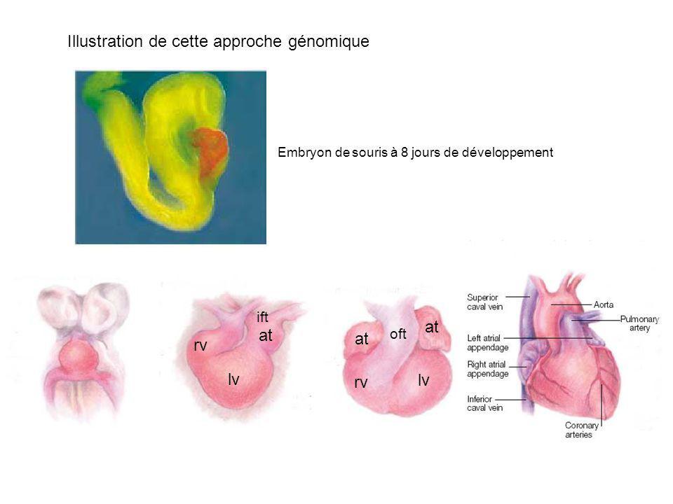 Illustration de cette approche génomique