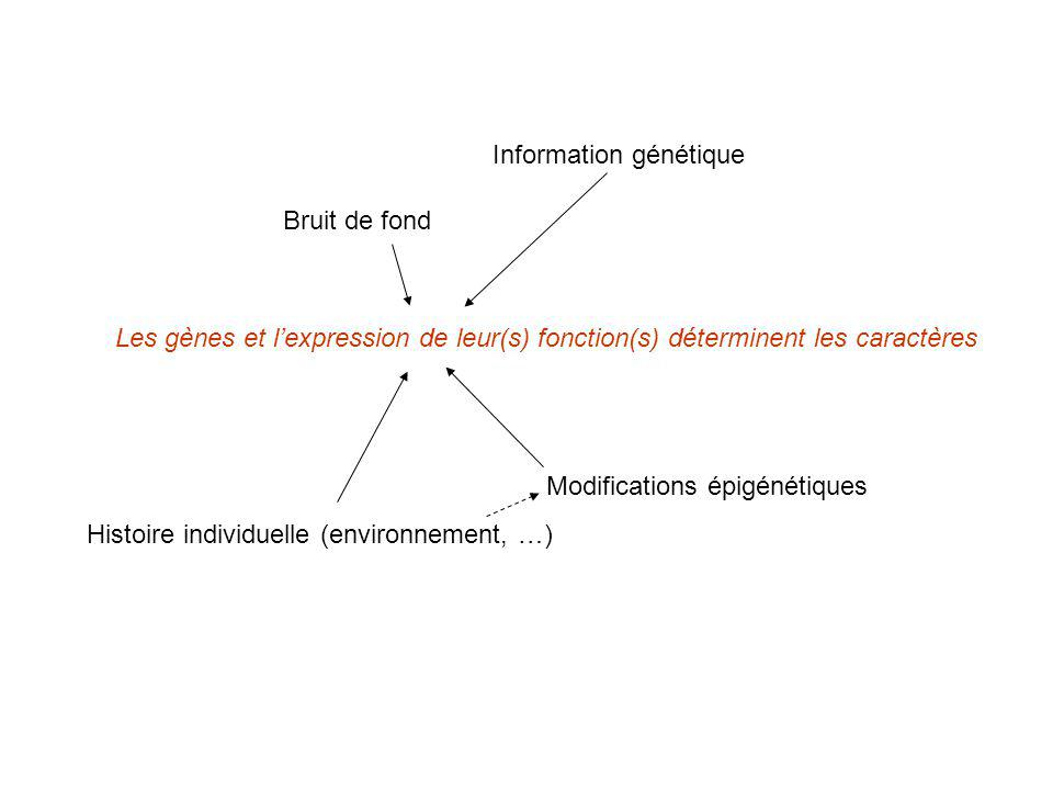 Information génétique