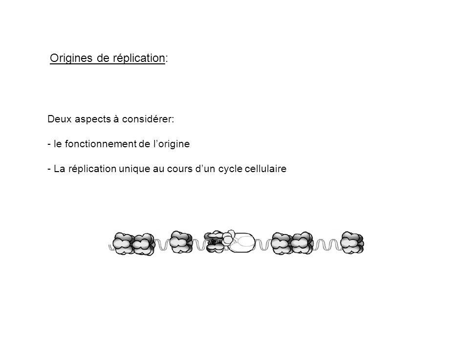 Origines de réplication: