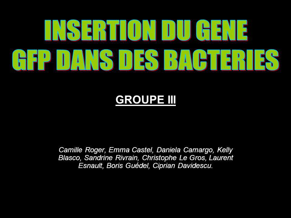 INSERTION DU GENE GFP DANS DES BACTERIES GROUPE III