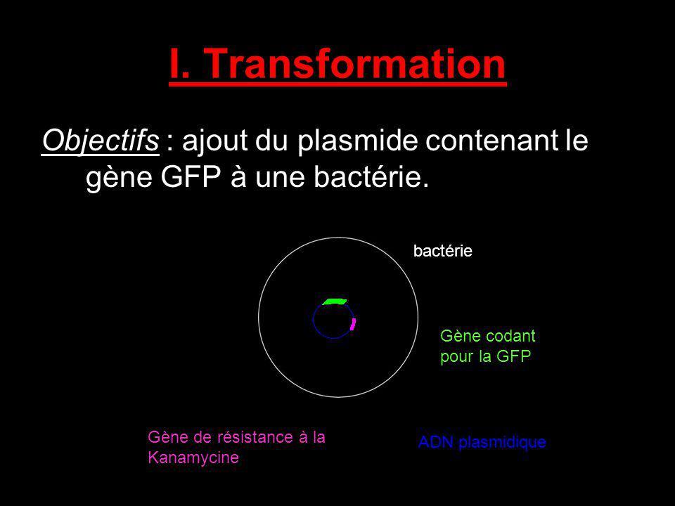 I. Transformation Objectifs : ajout du plasmide contenant le gène GFP à une bactérie. bactérie. Gène codant pour la GFP.