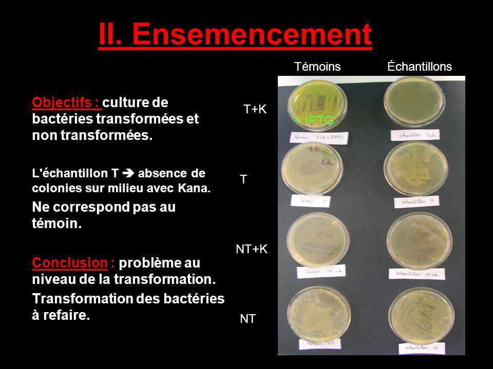 II. Ensemencement Témoins. Échantillons. Objectifs : culture de bactéries transformées et non transformées.