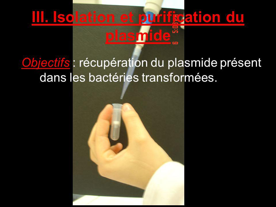 III. Isolation et purification du plasmide