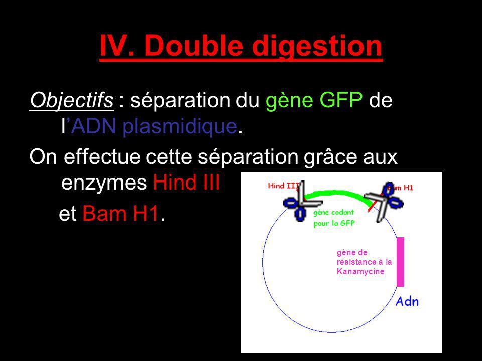 IV. Double digestion Objectifs : séparation du gène GFP de l'ADN plasmidique. On effectue cette séparation grâce aux enzymes Hind III.