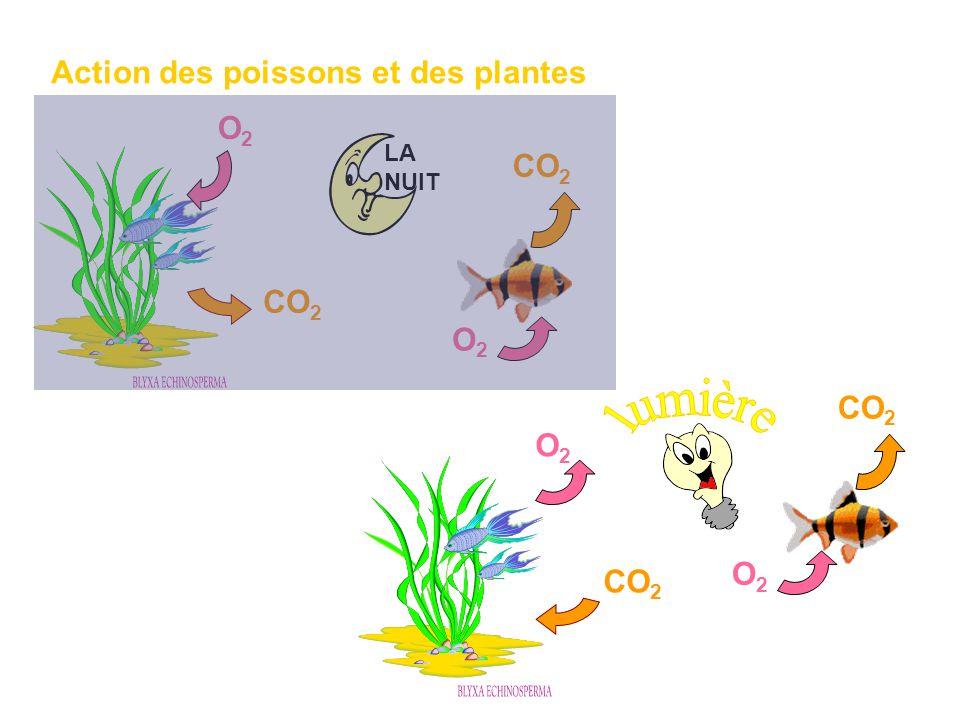Action des poissons et des plantes