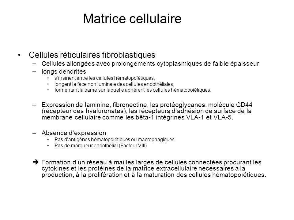 Matrice cellulaire Cellules réticulaires fibroblastiques