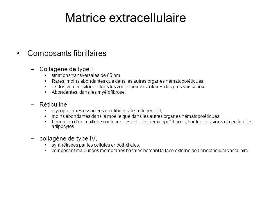Matrice extracellulaire