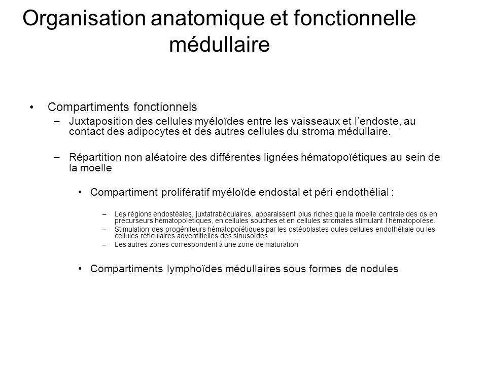 Organisation anatomique et fonctionnelle médullaire