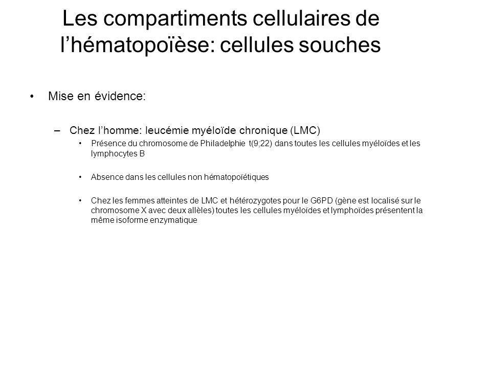 Les compartiments cellulaires de l'hématopoïèse: cellules souches