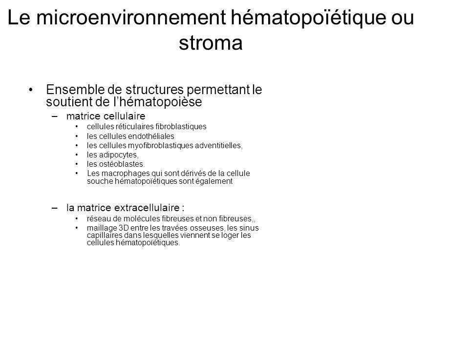 Le microenvironnement hématopoïétique ou stroma