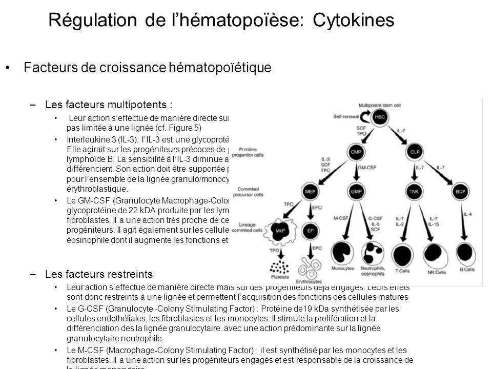 Régulation de l'hématopoïèse: Cytokines