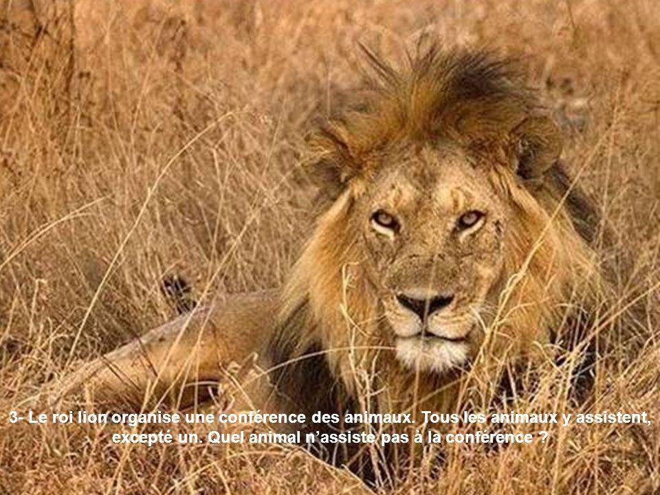 3- Le roi lion organise une conférence des animaux
