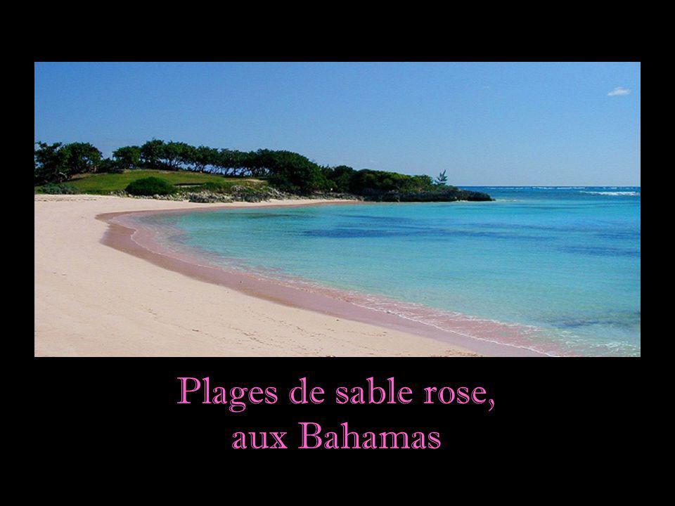 Plages de sable rose, aux Bahamas
