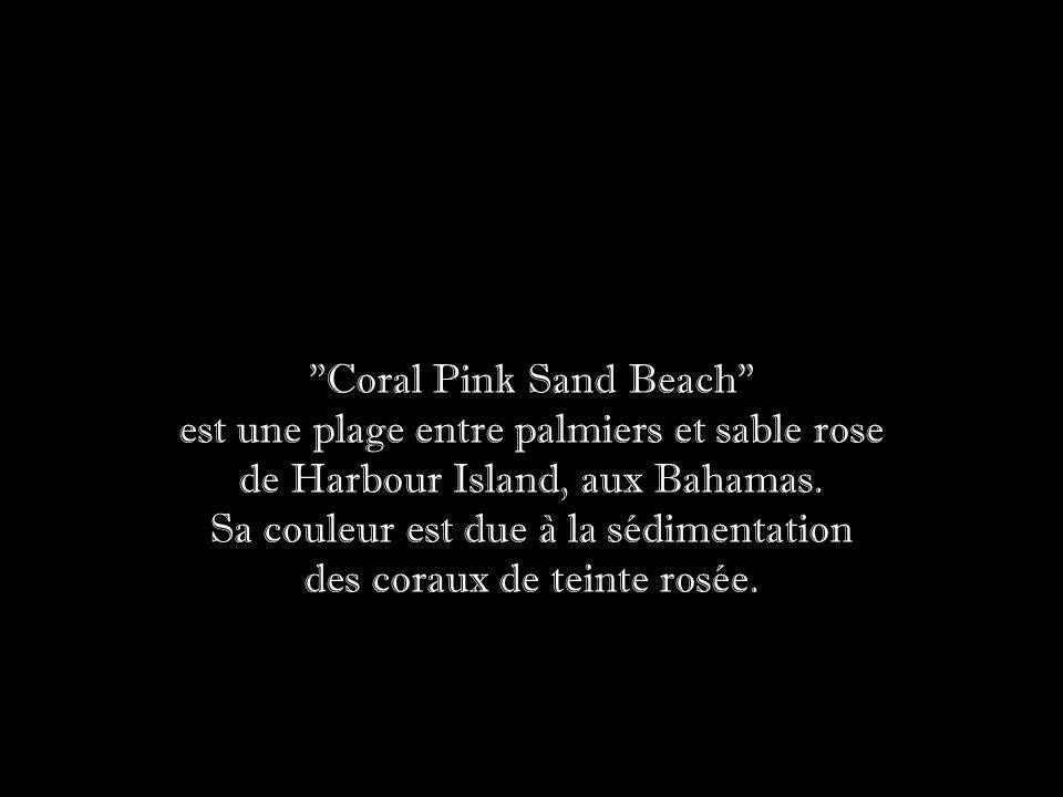est une plage entre palmiers et sable rose