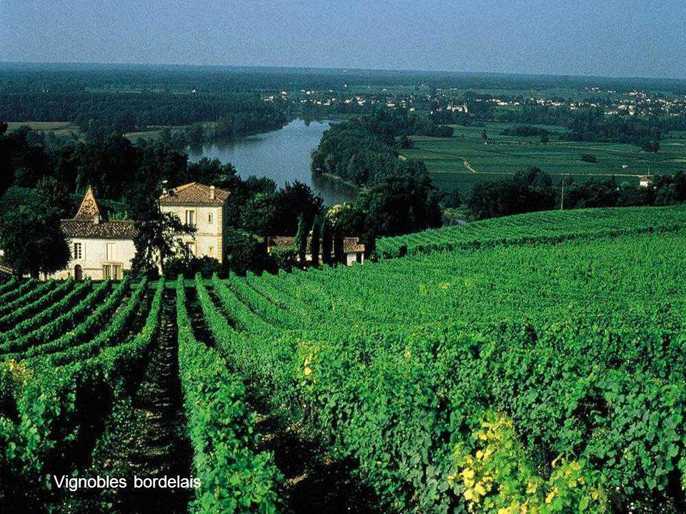 Vignobles bordelais