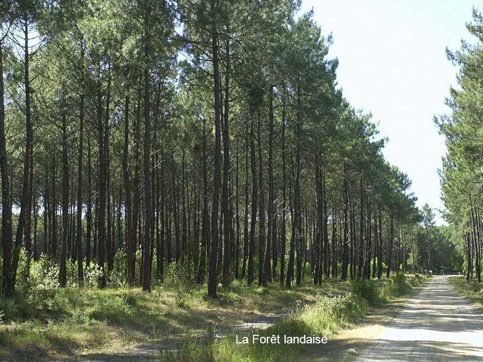 La Forêt landaise