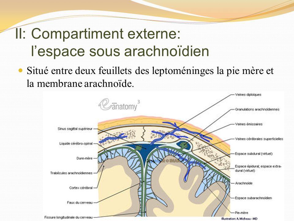 II: Compartiment externe: l'espace sous arachnoïdien
