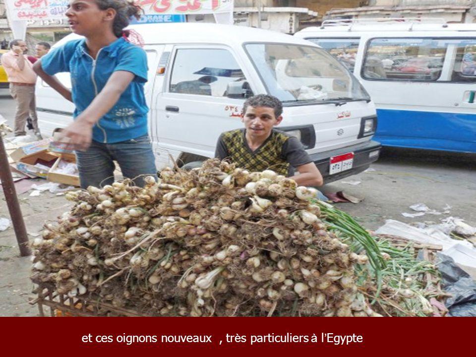 et ces oignons nouveaux , très particuliers à l'Egypte