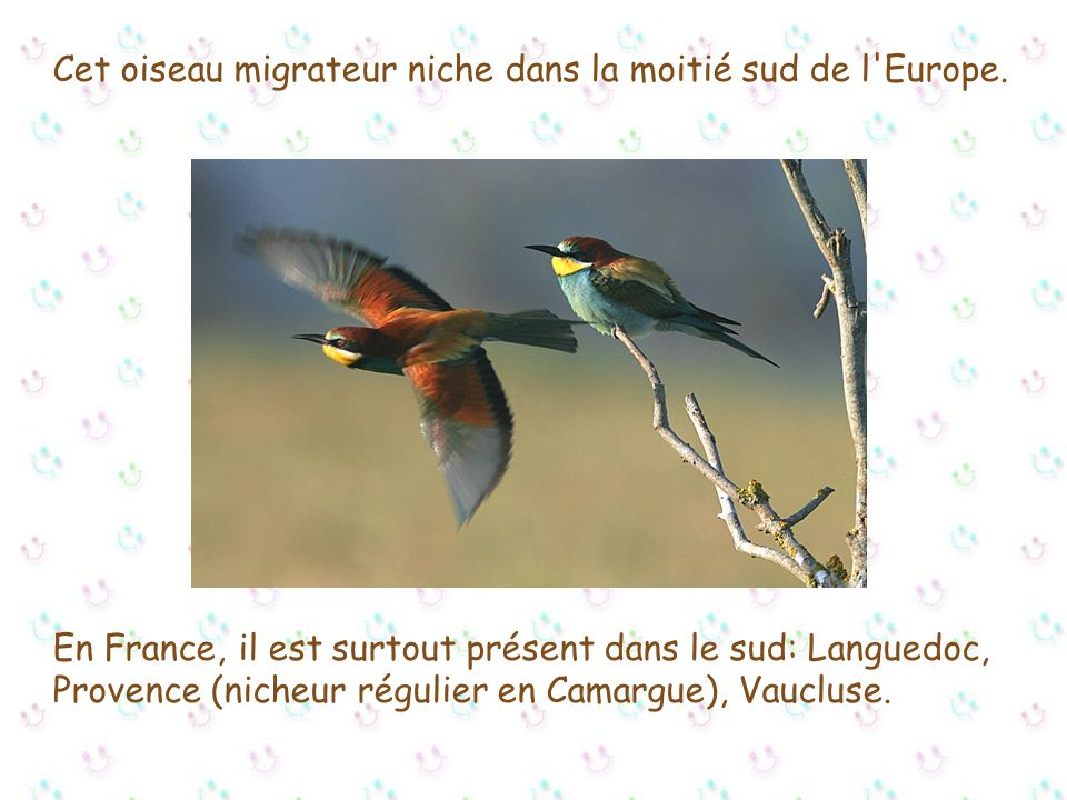 Cet oiseau migrateur niche dans la moitié sud de l Europe.